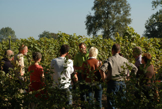 rondleiding-wijngaard